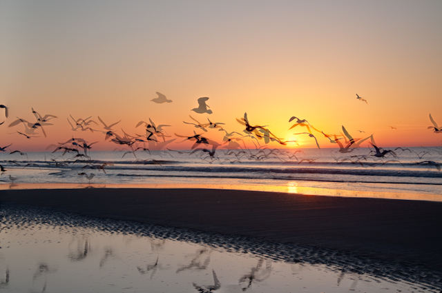 Briarcliffe ocean sunrise-2