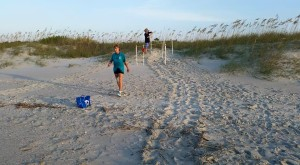 Turtle Tracks leading to Marked Nest